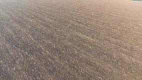 Campo fértil arado con una pequeña cantidad de heno almacen de video