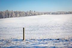 Campo gelido Fotografia Stock