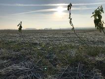 Campo gelido nell'inverno fotografia stock