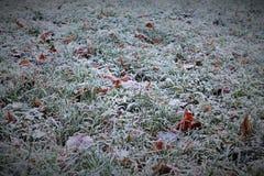 Campo gelido in ombra nella mattina di autunno Immagini Stock Libere da Diritti