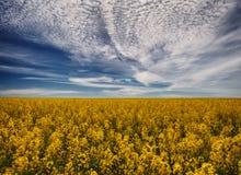 Campo giacimento pittoresco del seme di ravizzone Fotografie Stock