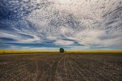 Campo giacimento pittoresco del seme di ravizzone Fotografie Stock Libere da Diritti