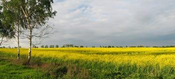 Campo giallo Immagini Stock Libere da Diritti