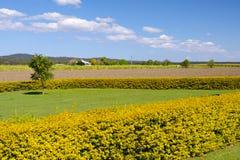 Campo giallo Immagine Stock