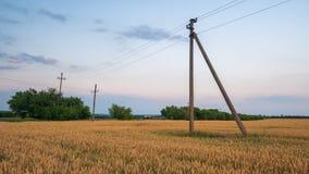Campo giallo con grano contro il tramonto Immagini Stock