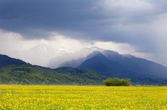 Campo giallo davanti alle montagne Fotografia Stock