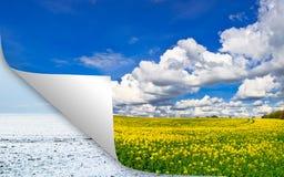 Campo giallo di estate contro il concetto di inverno Fotografie Stock Libere da Diritti