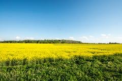 Campo giallo di estate, scape massiccio del cielo Fotografie Stock