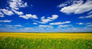 Campo giallo e cielo luminoso Fotografia Stock