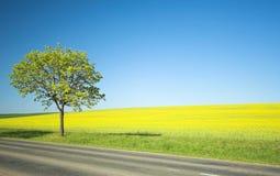 Campo giallo ed albero solo immagine stock