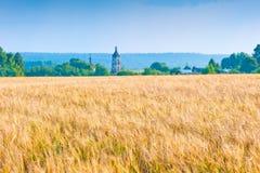 Campo giallo russo con il raccolto del grano Fotografia Stock
