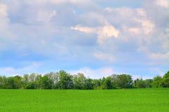 Campo gramíneo Fotos de Stock