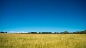 Campo gramíneo com céus azuis Imagens de Stock