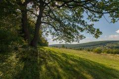 Campo, grande albero, immagini stock libere da diritti