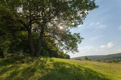 Campo, grande albero, fotografia stock libera da diritti