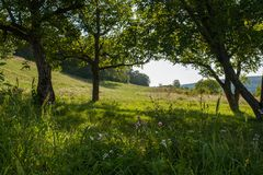 Campo, grande albero, fotografia stock