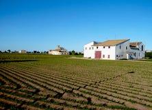 Campo grande com as plantas verdes em Valência, Espanha Casas e pomar da exploração agrícola Crescimento de vegetais Lugar calmo  Fotografia de Stock