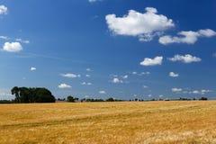 Campo grande de la cebada y cielo azul fotografía de archivo libre de regalías