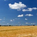 Campo grande de la cebada y cuadrado del cielo azul foto de archivo