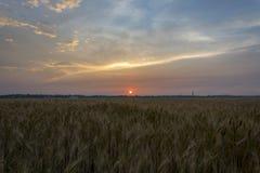 Campo, grano, segale o orzo e un bello tramonto sui precedenti della città U Fotografia Stock