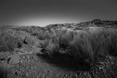Campo grigio Fotografia Stock
