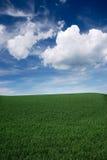 Campo herboso Imagen de archivo libre de regalías