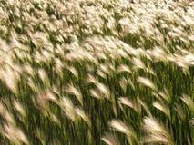 Campo herboso Fotos de archivo