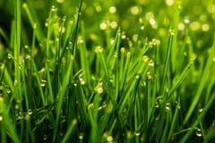 Campo herboso Fotografía de archivo