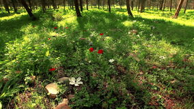 Campo herboso con las flores y los árboles almacen de metraje de vídeo
