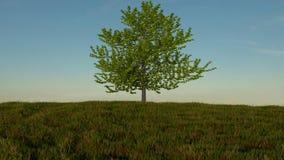 Campo herboso con un solo árbol que se coloca en el centro Foto de archivo libre de regalías