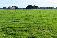 Campo herboso de la hierba verde soleado imágenes de archivo libres de regalías