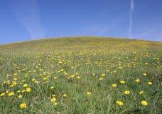 Campo herboso del diente de león de la colina Fotografía de archivo