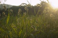 Campo herboso en la base de las montañas en la puesta del sol Imágenes de archivo libres de regalías