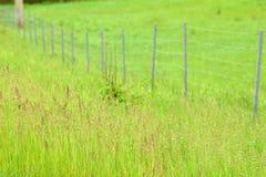 Campo herboso verde Imagen de archivo