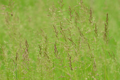 Campo herboso verde Imagen de archivo libre de regalías