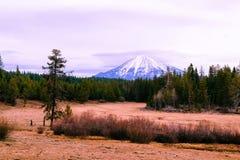 Campo hermoso con los arbustos secos y árboles de pino verdes con una alta montaña nevosa asombrosa en la parte posterior imagen de archivo libre de regalías