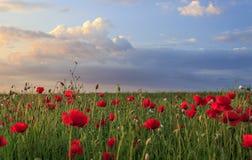 Campo hermoso de la amapola con las nubes Foto de archivo libre de regalías