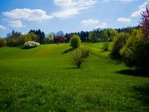 Campo hermoso de la naturaleza Fotos de archivo