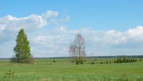 Campo hermoso de la primavera, Lituania Imágenes de archivo libres de regalías