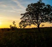 campo hermoso de la puesta del sol del paisaje Fotografía de archivo