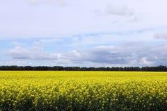 Campo hermoso del Canola 2 de Manitoba Foto de archivo