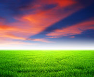 Campo hermoso del cielo del paisaje de la granja de la puesta del sol del arroz Fotos de archivo libres de regalías