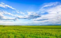 Campo hermoso del paisaje del trigo, de la nube y de la montaña Fotografía de archivo libre de regalías