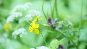Campo hermoso del prado con las flores salvajes Primer de los Wildflowers de la primavera almacen de metraje de vídeo