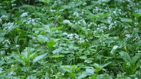 Campo hermoso del prado con las flores salvajes Primer de los Wildflowers de la primavera metrajes