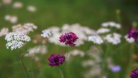 Campo hermoso del prado con las flores salvajes Primer de los Wildflowers de la primavera Concepto del cuidado médico Campo rural Fotografía de archivo libre de regalías