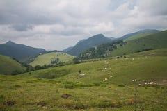 Campo hermoso del valle verde con el fondo de los animales del campo en montañas iraty/del irati Imágenes de archivo libres de regalías