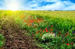 Campo hermoso del verano en la salida del sol Foto de archivo libre de regalías