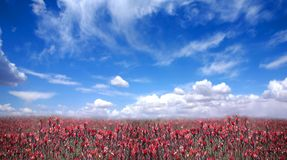 Campo hermoso en América Fotos de archivo