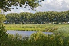 Campo holandês fotografia de stock royalty free